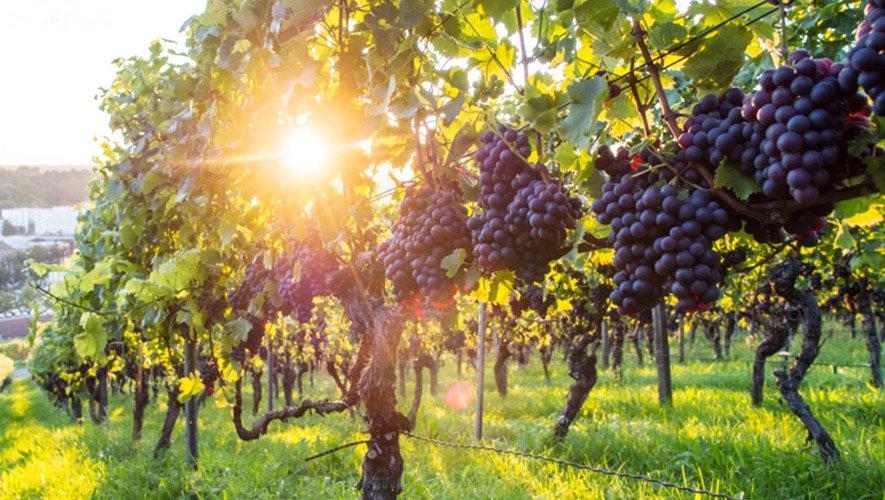 simpy lovely wines getty 885 — Chkhorotsku,Ge